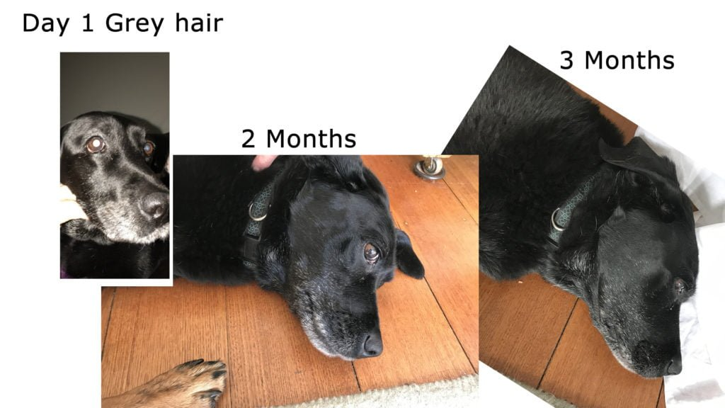 Age Pill Results Reduced grey hair age pill dog