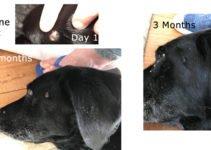 Canine Wart Age Pill Dog