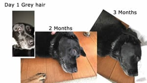 AGE Pill Grey hair reduction with Milo the AGE PIll Dog.