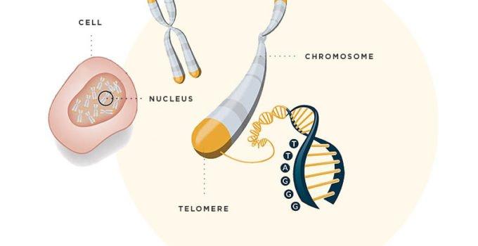 Telomere TESTING Australia