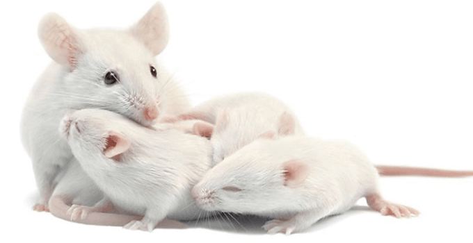 age pill reverse aging in mice