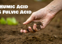 Fulvic Acid and Humic Acid