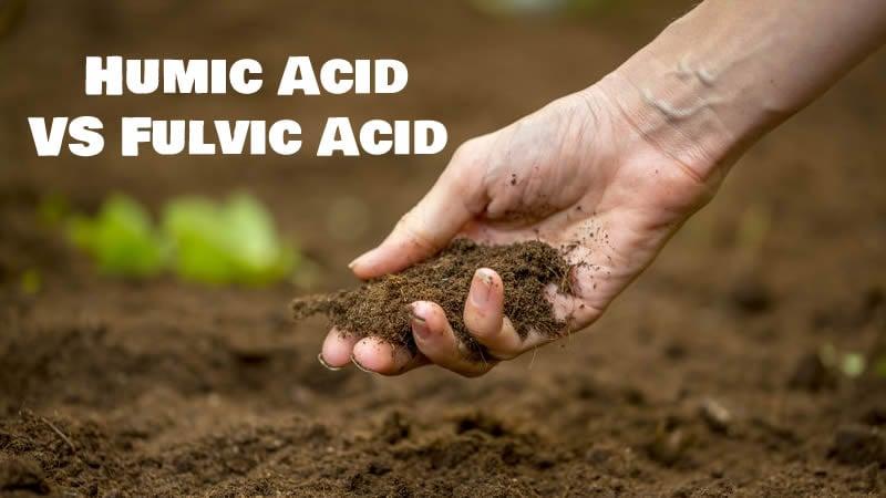 Humic Acid vs Fulvic Acid